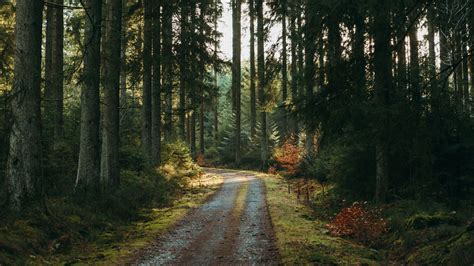 Download wallpaper 3840x2160 forest, road, pines, trees ...