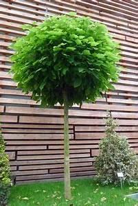 Kleine Bäume Für Garten : hausb ume f r kleine g rten garten haus b ume b ume garten und kleine g rten ~ A.2002-acura-tl-radio.info Haus und Dekorationen