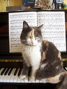 Cat fugue - Wikipedia