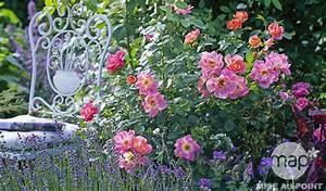 Que Faire Avec Des Fleurs De Lavande : 5 id es de plantes associer au rosier jardinerie truffaut conseils rosiers truffaut ~ Dallasstarsshop.com Idées de Décoration