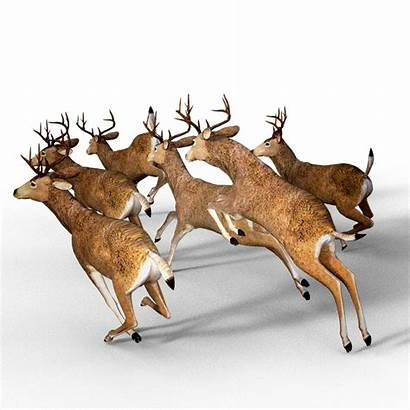 Deer Hunting Pack Antler Damm Wild Decoys