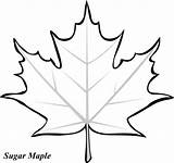 Coloring Pages Leaves Oak Leaf Printable Clipartpanda Fall Tree Clipart Maple Trace Template Colouring Cut Sugar Leave Terms Patterns Shape sketch template