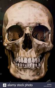 Image Of A Skull With Diamond Teeth Stock Photo  Royalty