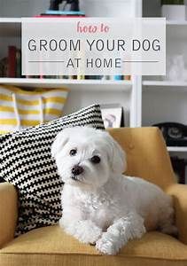 de 25 bedste ideer inden for havanese grooming pa With dog grooming at home