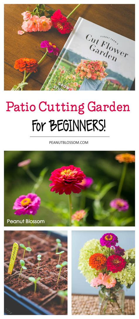 patio cutting gardens for beginners peanut blossom