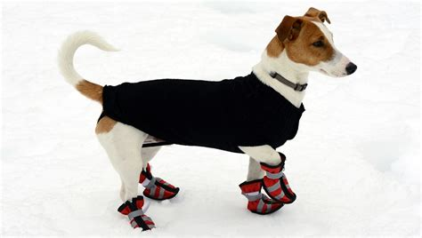 helpful tips  walking dogs   snow dogtime
