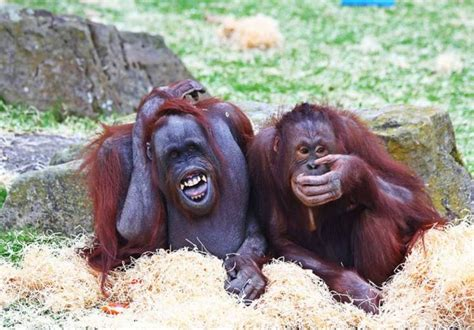 bad jokes cheer having line animals smile special amazing grinning blackpool zoo cn ten rex these features animal days reddit