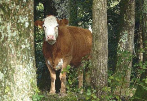 chambre d agriculture du jura actualités biomasse et filières vertes biomasse conseil fr