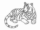 Tiger Coloring Tigers Printable Pages Children Print Animals Baby Realistic Coloringbay sketch template