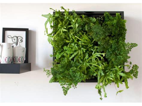 karoo green wall latour marliac