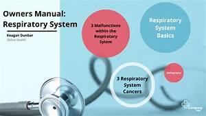 Respiratory System Owners Manual By Keagan Dunbar On Prezi