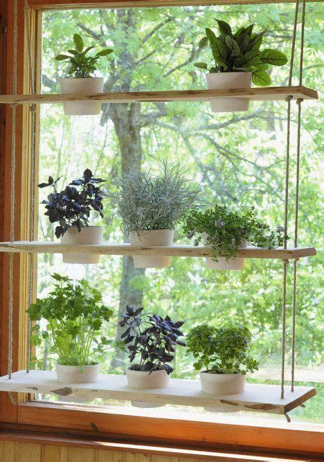 Outdoor Window Sill Plants by 25 Best Ideas About Window Plants On Indoor