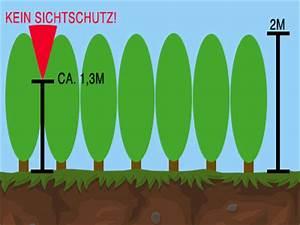 Kirschlorbeer Pflanzen Abstand : wie gro muss der pflanzabstand bei heckenpflanzen sein ~ Lizthompson.info Haus und Dekorationen