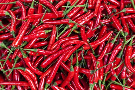 Capsaicin 10 Things You Should Know For Topical Use