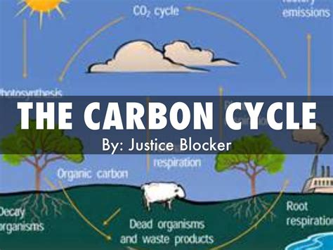 The Carbon Cycle By Justice Blocker