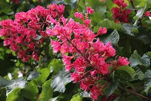 Pflanzen Im Mai : bl tenpracht im mai foto bild pflanzen pilze flechten b ume blatt bl te bilder auf ~ Buech-reservation.com Haus und Dekorationen