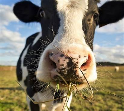 Animal Welfare Non