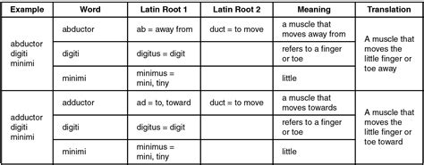 table explains  latin root meaning