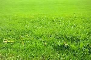 Erde Für Rasen : rasen eins hen schritt f r schritt garden blog ~ Lizthompson.info Haus und Dekorationen