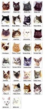 different cat breeds cat breed pictures photos of different cat breeds