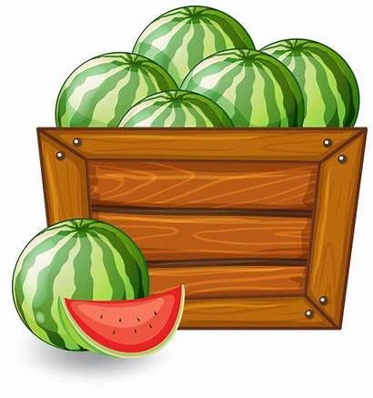 Watermelon Banner Vector Wooden Background Border Fruit