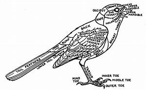 Birds Of Yosemite National Park  1954  1963    U0026quot Introduction  U0026quot  By Cyril A  Stebbins And Robert C
