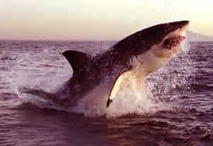 sauv 233 s par les dauphins dauphinlibre be