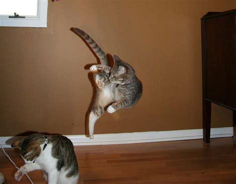 ninja cats stealth karate dang cute team jimmy joe