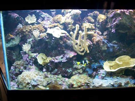 l aquarium du croisic reportage sur l aquarium du croisic