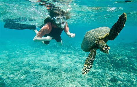 Aruba Private Catamaran Rental by 6 Reasons To Try And Love Snorkeling In Cancun Aquaworld
