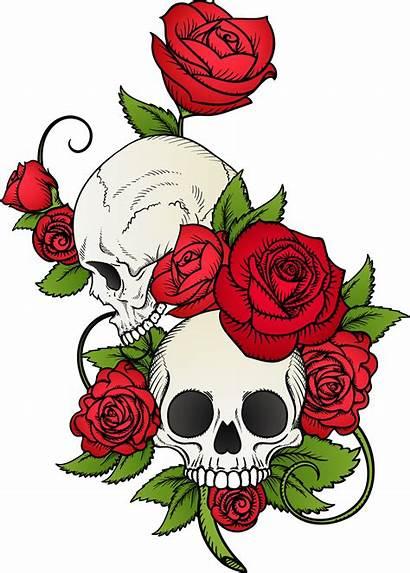 Skull Tattoo Rose Drawing Skulls Flowers Vector