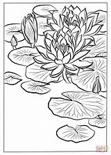 Lily Coloring Water Flower Pages Drawing Koson Ohara Printable Flowers Getdrawings sketch template