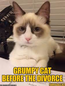 what to before getting a cat grumpy cat before the divorce pictures and quotes