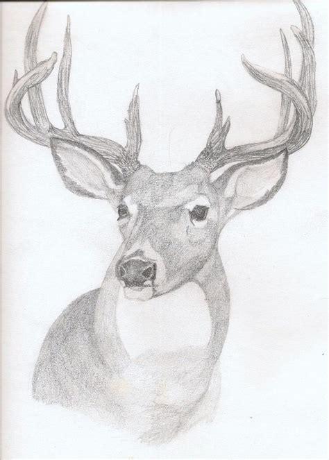 deer drawings  pencil art deer rough sketch  pencil