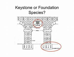 Keystone And Foundation Species