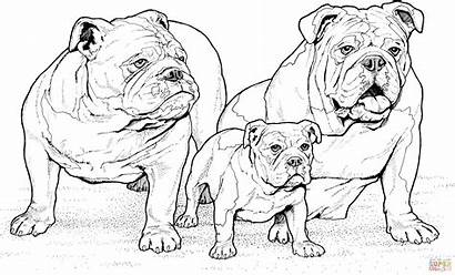 Coloring Pages English Bulldogs Puppy Printable Drawing