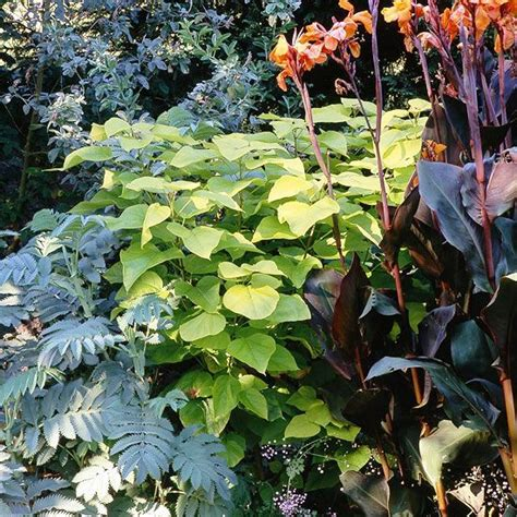 plants of the northwest 25 best ideas about pacific northwest style on pinterest pacific northwest fashion