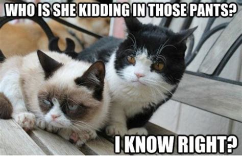 Red Pants Meme - 50 most funny grumpy cat meme of all time