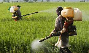 Effects of pesticides on pollution | kullabs.com