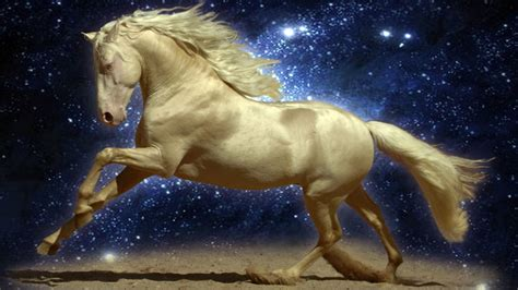 fantasy art horses horses wallpaper  hd
