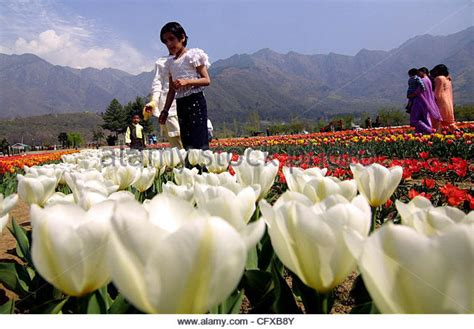 see asia s largest tulip flitto content see the bigest tulip garden in asia in
