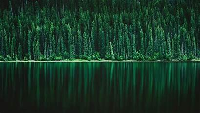 Forest Tree Lake Nature Pine 5k 4k