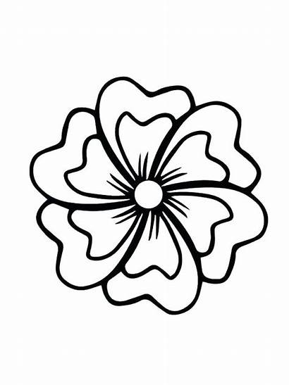 Flower Jasmine Drawing Coloring Pages Clipartmag