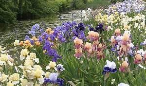 Franciris 2005 exposition florale d39iris en yvelines for Iris jardin