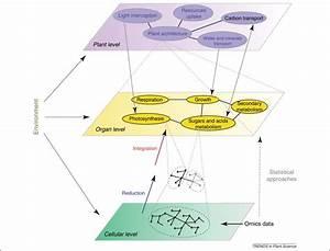 Scientific Method Steps in Biology images