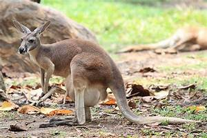 Image Gallery kangaroo pouches