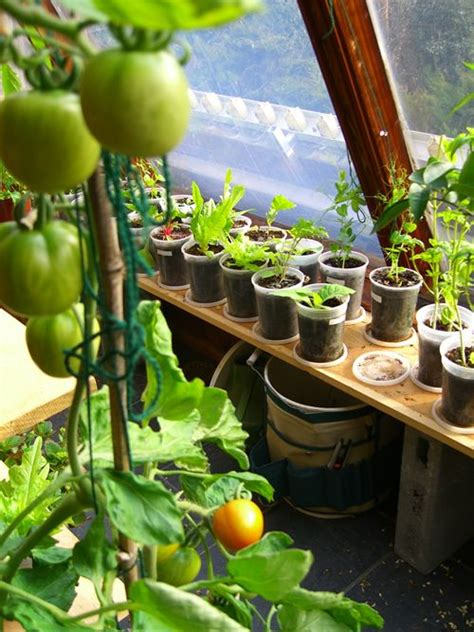 1000+ Ideas About Indoor Vegetable Gardening On Pinterest
