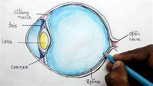 How To Structure Of Human Eye Step By Step For Beginners