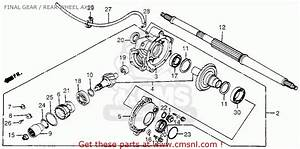 Honda 300 Fourtrax Rear End Parts Diagram