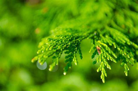images nature forest branch droplet drop dew
